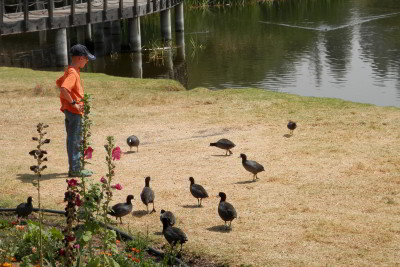 Nathanael and the Birds