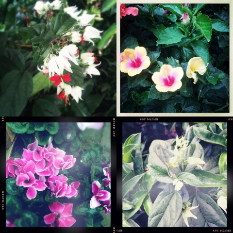 More plants and flowers