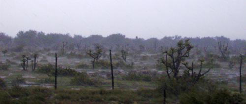A rainy patch in the state of Nuevo Laredo, Mexico